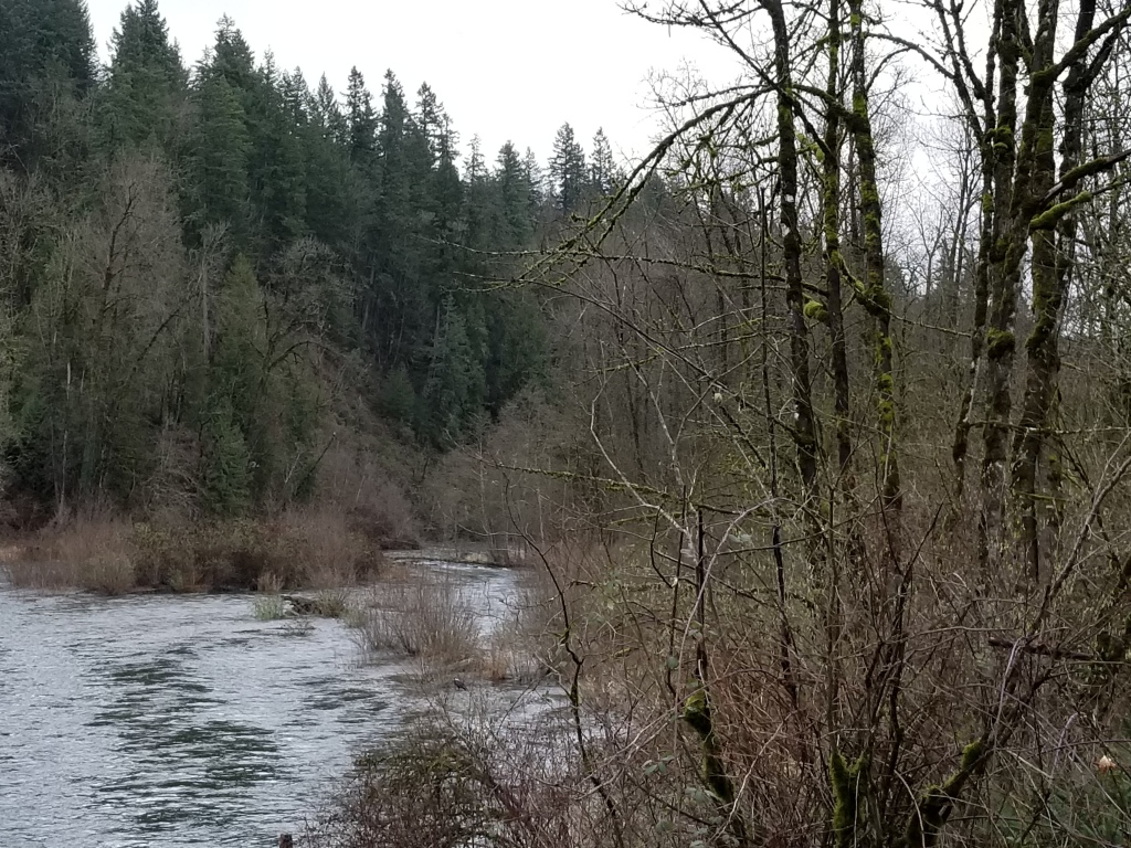 photograph of a wooded Cedar River in wintertime, no leaves on the deciduous trees.